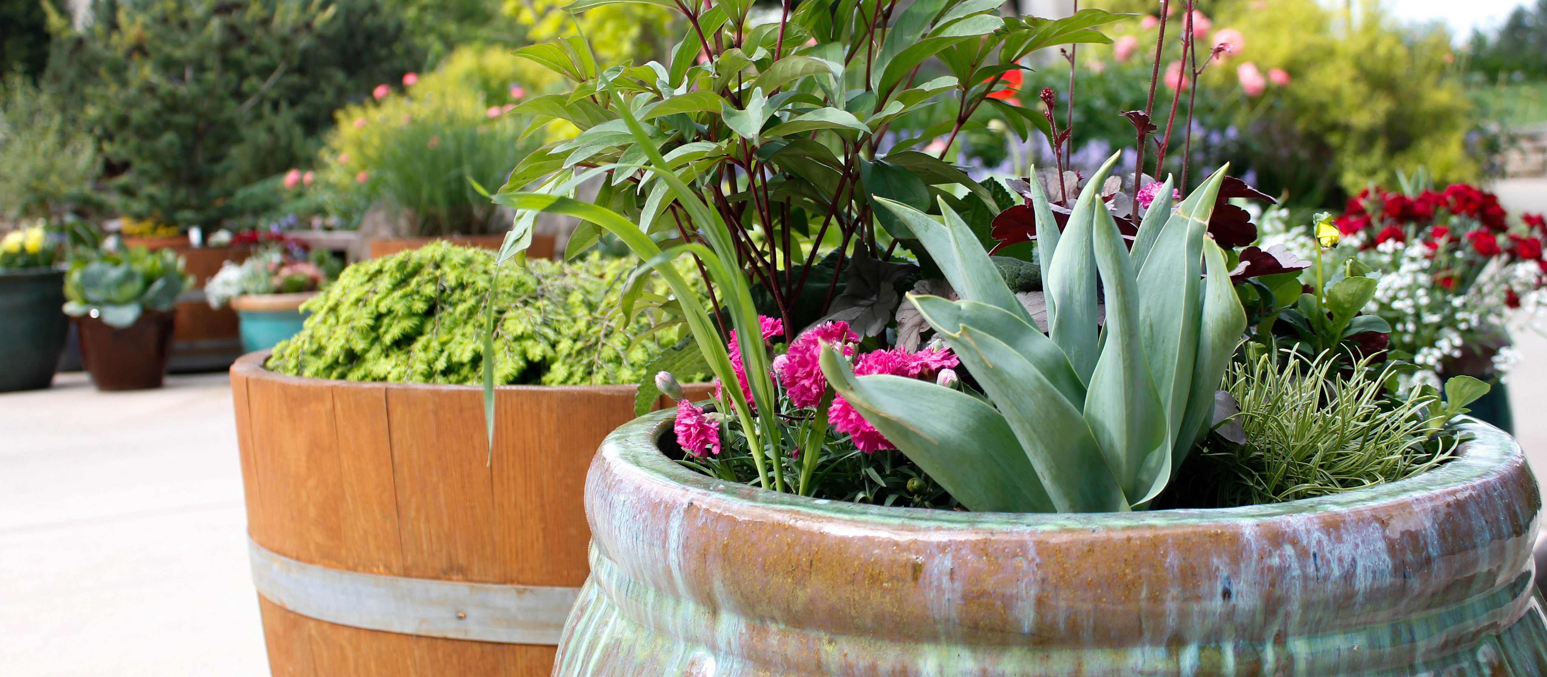 Red, pink, and purple potted flowers show what container garden workshop results can look like.