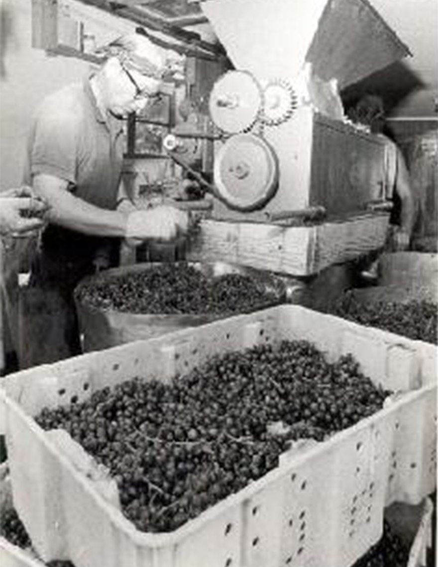 Pioneering winemakers in Indiana.