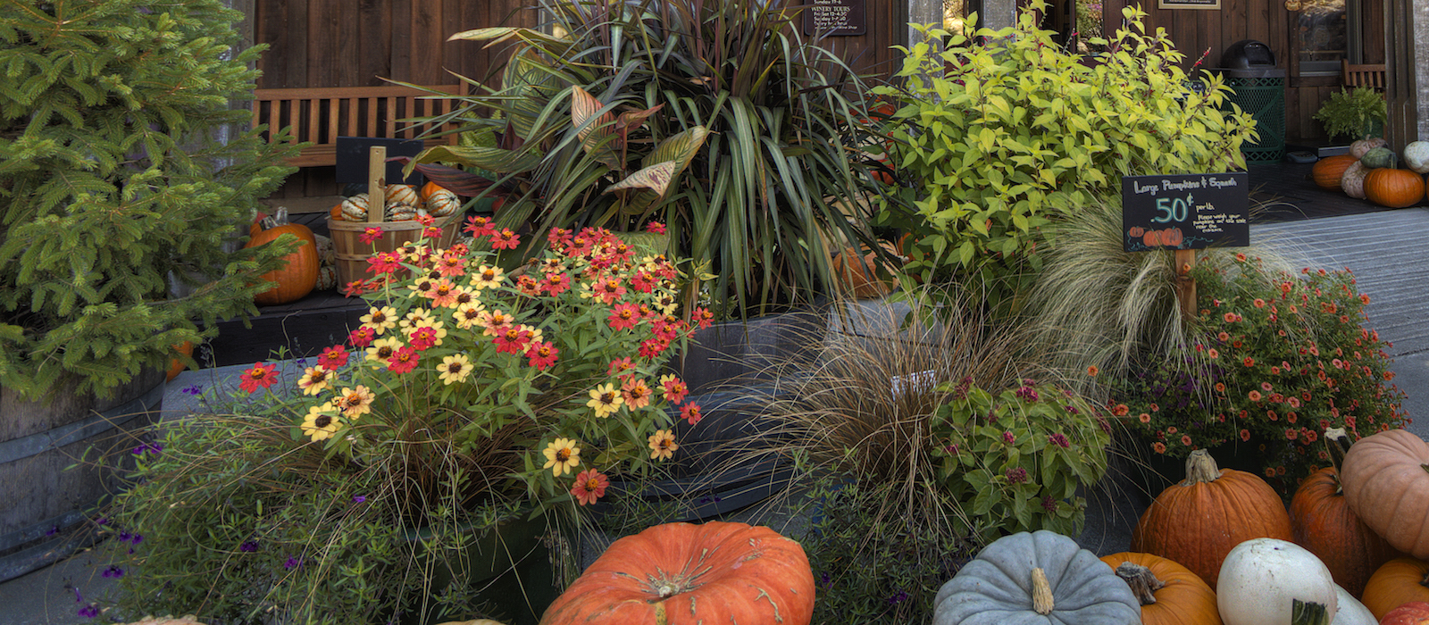 oliver winery events ornamental container garden workshop